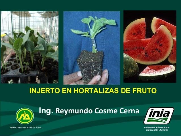• INJERTO EN HORTALIZAS DE FRUTO •Instituto Nacional de Innovación Agraria •MINISTERIO DE AGRICULTURA Ing. Reymundo Cosme ...