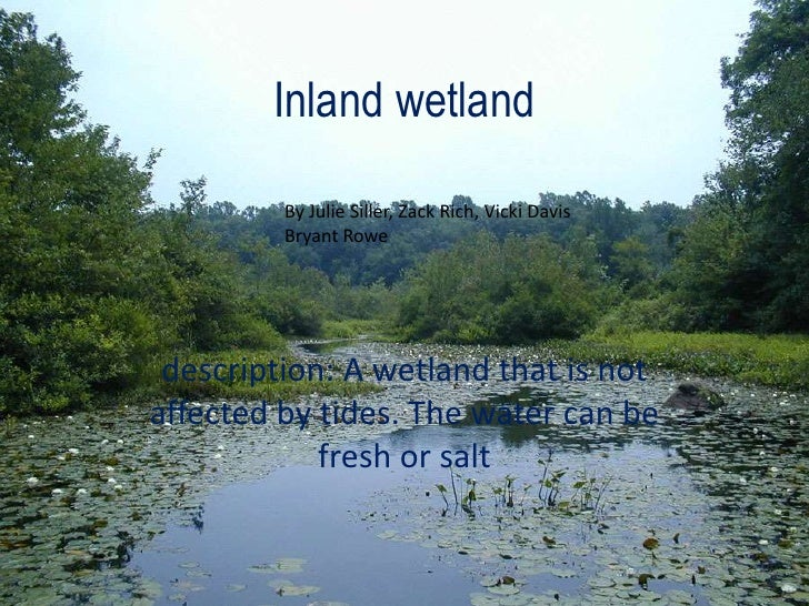 Inland wetland<br />description: A wetland that is not affected by tides. The water can be fresh or salt<br />By Julie Sil...
