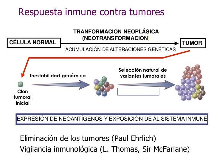 Respuesta inmune contra tumores                          TRANFORMACIÓN NEOPLÁSICA                            (NEOTRANSFORM...