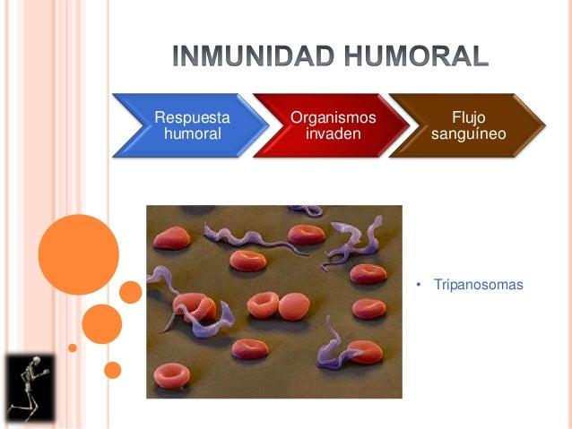 RespuestahumoralOrganismosinvadenFlujosanguíneo• Tripanosomas