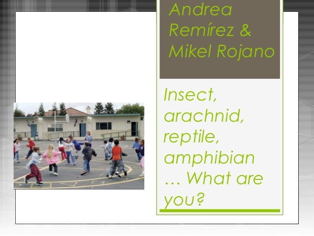AndreaRemírez &Mikel RojanoInsect,arachnid,reptile,amphibian… What areyou?