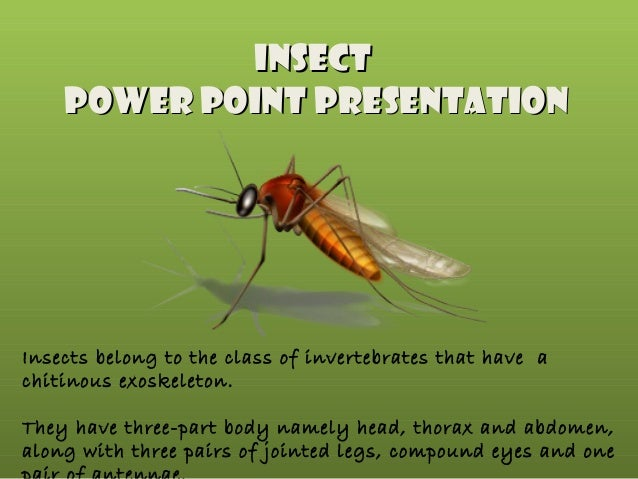 Insect Power point Presentation  Insects belong to the class of invertebrates that have a chitinous exoskeleton. They have...