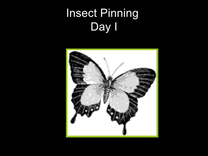 Insect Pinning  Day I