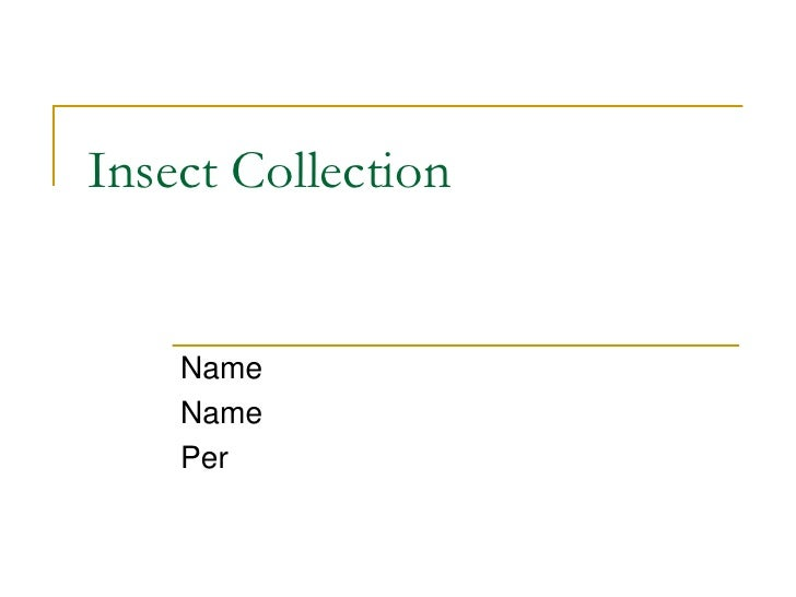 Insect Collection       Name     Name     Per