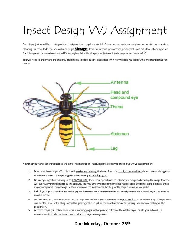 Insect Design VVJ Assignment For this project wewill becreating an insect sculpture fromrecycled materials.Beforewecan cre...