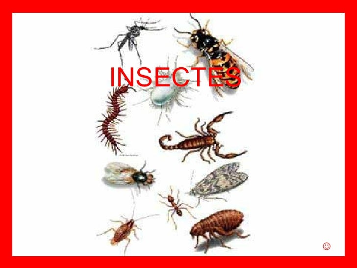 INSECTES 