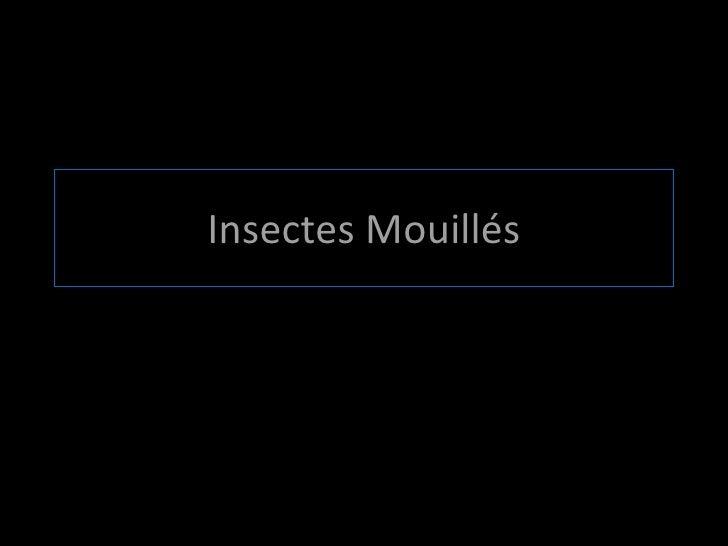 Insectes Mouillés
