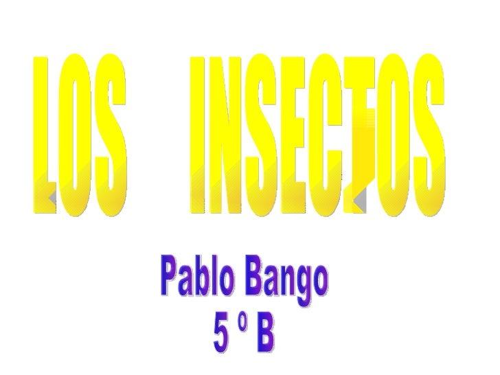 LOS  INSECTOS Pablo Bango 5 º B
