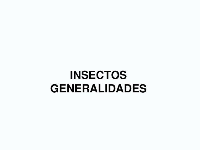 INSECTOS GENERALIDADES