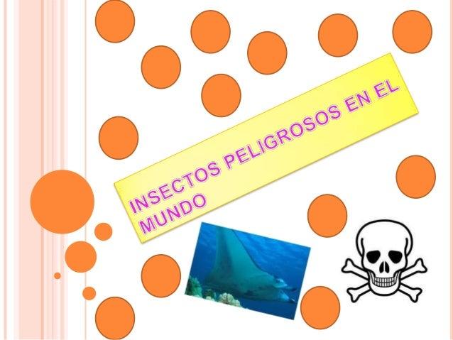 Insectos peligrosos en el mundo
