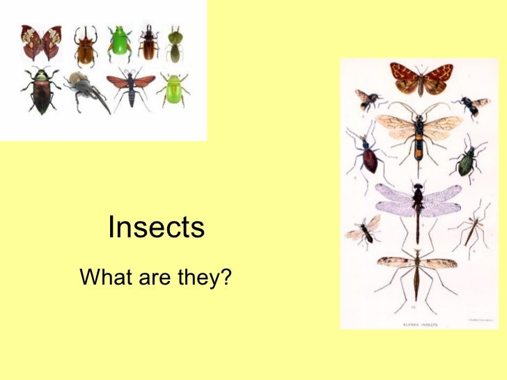 Insects What are they?