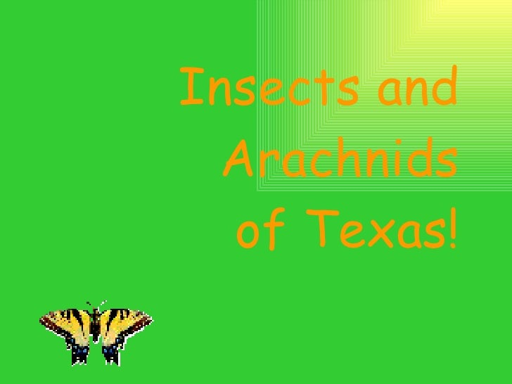 Insects and Arachnids of Texas!