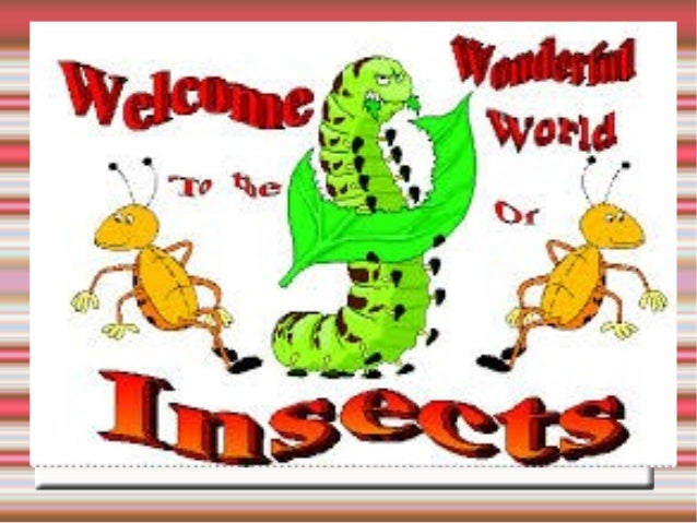 THE CHARACTERISTICS OF THE INSECTS: