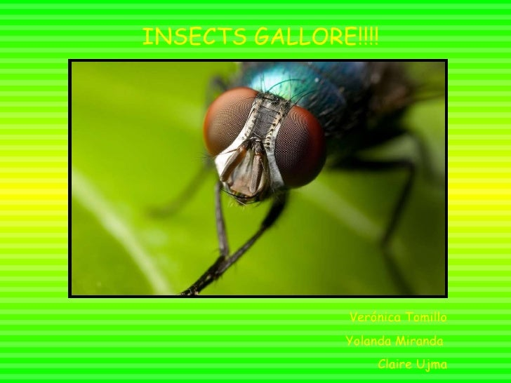 Insects gallore!!!