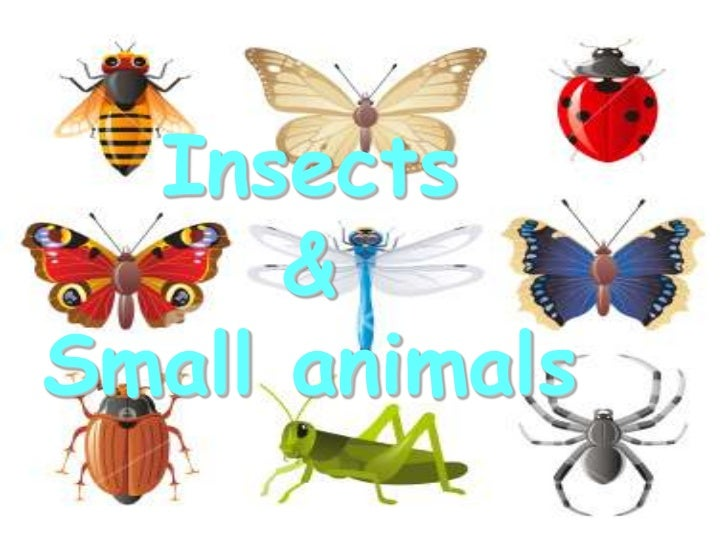 Insects & small animals