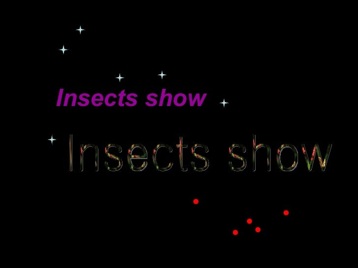 Insects show   Insects show