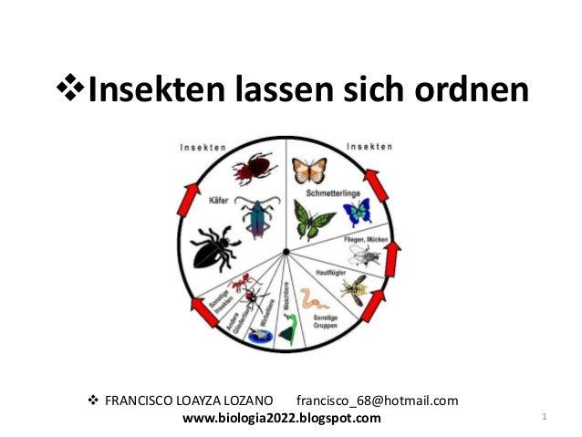 Insekten lassen sich ordnen   FRANCISCO LOAYZA LOZANO francisco_68@hotmail.com www.biologia2022.blogspot.com  1