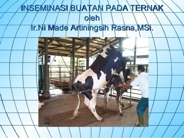 Inseminasi buatan pada sapi