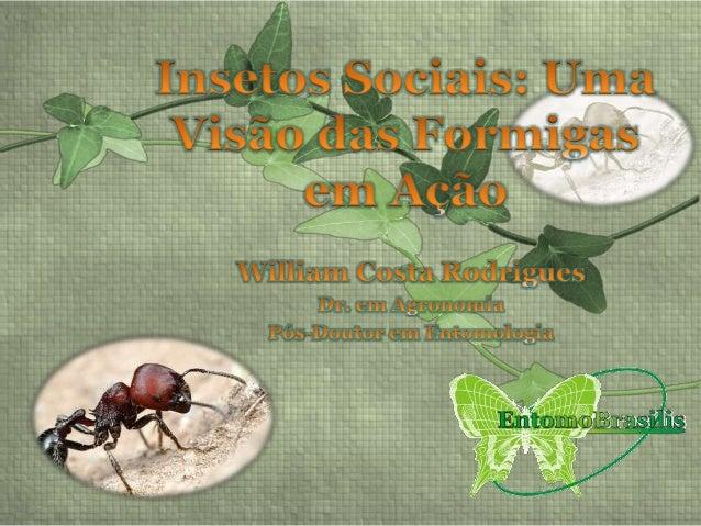 • Os Insetos Sociais • Compilação do Livro Formigas em Ação de Deborah Gordon; • Discussão dos dados apresentados pela aut...