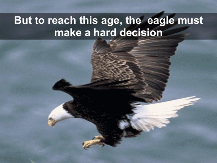 inspirational rebirthofthe eagle