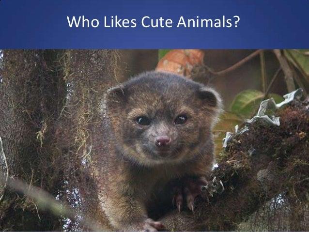 Who Likes Cute Animals?
