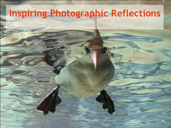 Inspiring Photographic Reflections