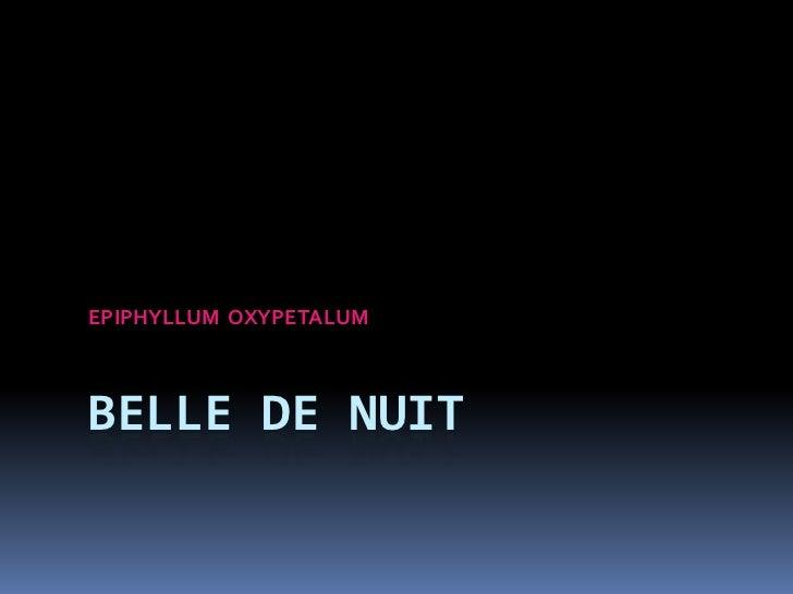BELLE DE NUIT<br />EPIPHYLLUM  OXYPETALUM<br />