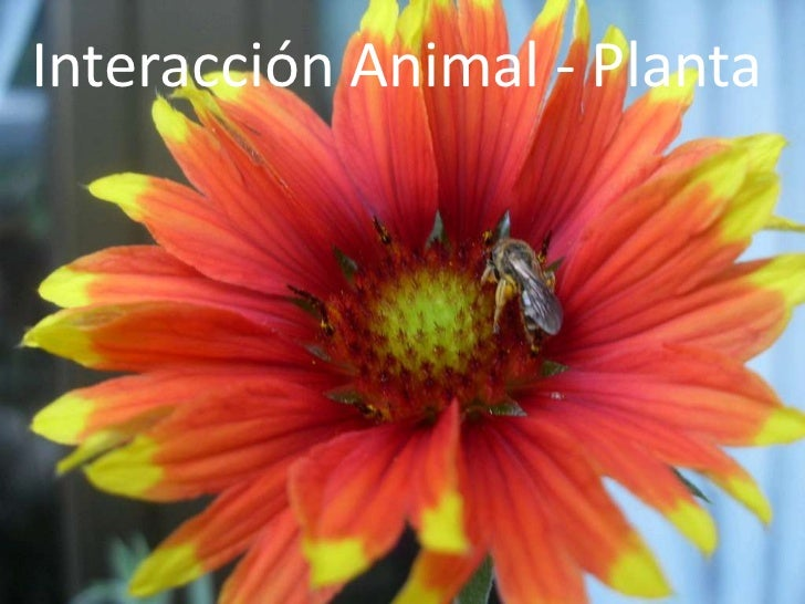 Interacción Animal - Planta<br />