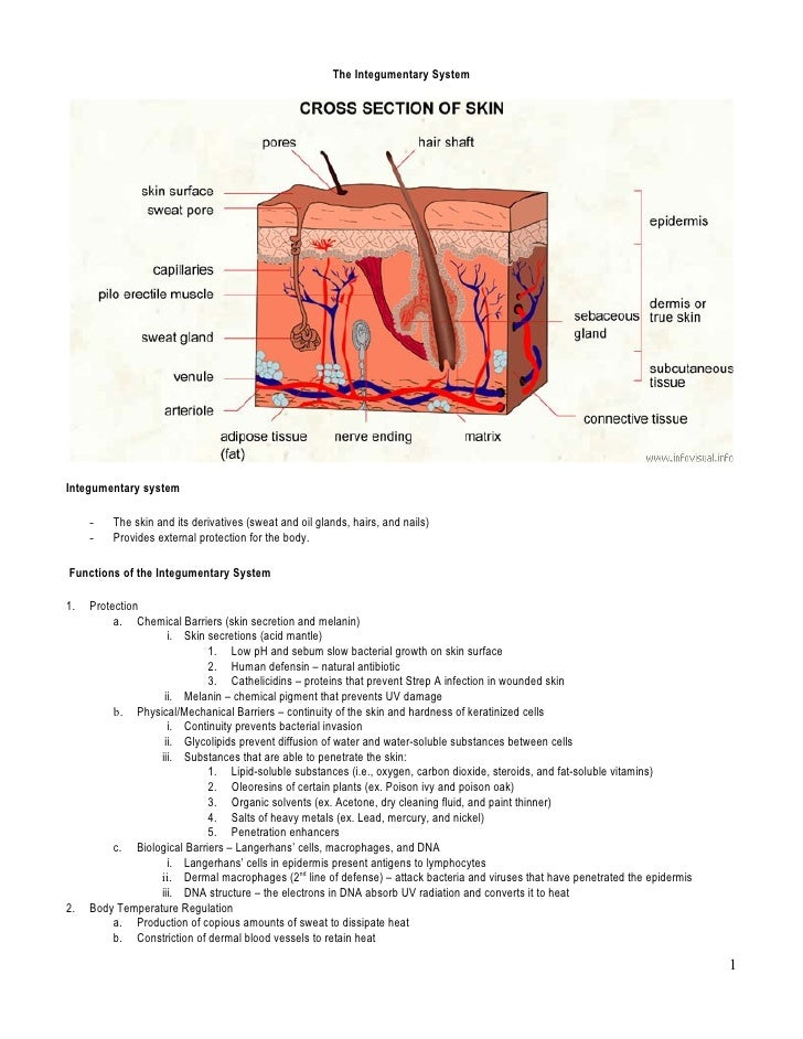 module 02 ct integumentary system Bsc 2346 module 02 case study integumentary system we use your linkedin profile and activity data to personalize ads and to show you more relevant ads.