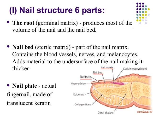 parts of the skin and their functions pdf