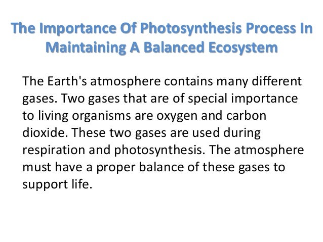 Essay The Importance Of Photosynthesis In Maintaining A Balanced Essay The  Importance Of Photosynthesis In Maintaining