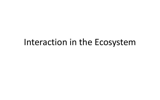 Interaction in the Ecosystem