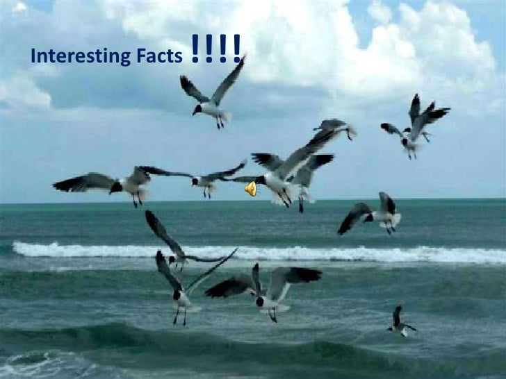 Interesting Facts !!!!<br />