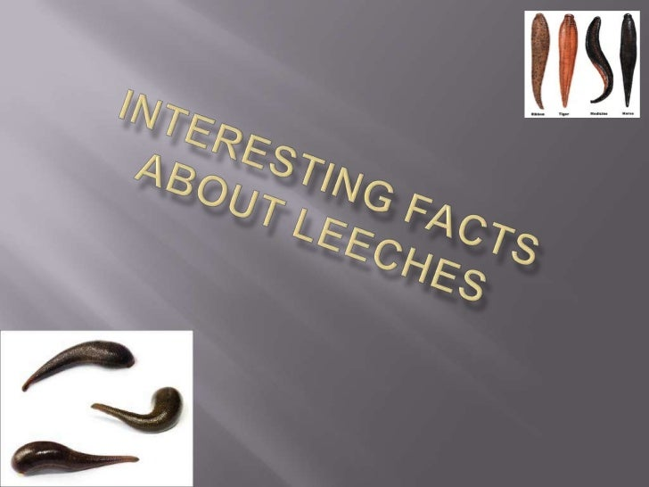 1.   Leeches are worms with suckers on     each end of their body.2.   Leeches can be 1 centimeter to over     25 centimet...