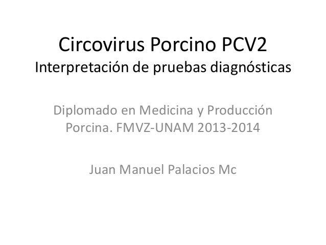Circovirus Porcino PCV2 Interpretación de pruebas diagnósticas Diplomado en Medicina y Producción Porcina. FMVZ-UNAM 2013-...