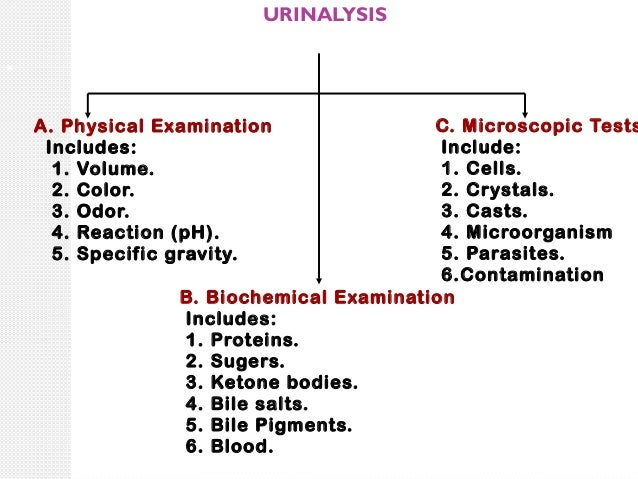 urine analysis results pdf
