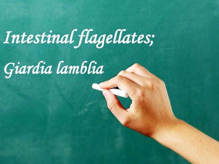 Intestinal flagellates;Giardia lamblia