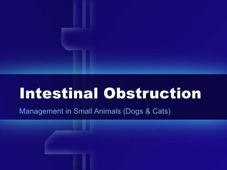 Intestinal Obstruction Management in Small Animals (Dogs & Cats)
