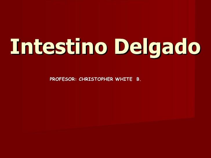 Intestino Delgado PROFESOR: CHRISTOPHER WHITE  B.