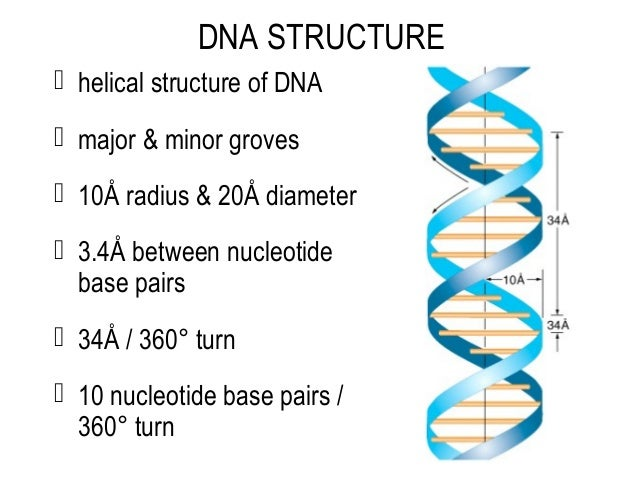 an introduction to the analysis of the structure of dna Introduction the explanation of dna testing that follows is intended as an introduction to the subject for those who may have.