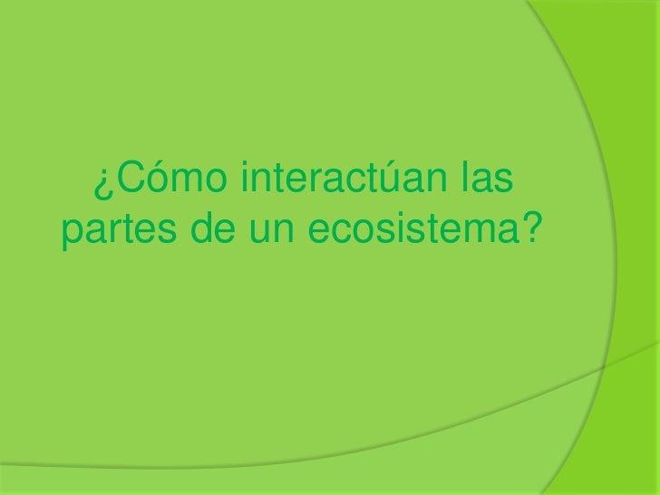 ¿Cómo interactúan laspartes de un ecosistema?