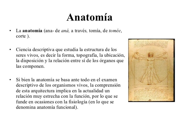Anatomía <ul><li>La  anatomía  ( ana-  de   aná,  a través ,  tomía, de  tomée , corte  ). </li></ul><ul><li>Ciencia  desc...