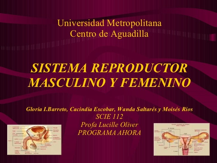 Universidad Metropolitana Centro de Aguadilla SISTEMA REPRODUCTOR MASCULINO Y FEMENINO Gloria I.Barreto, Cacindia Escobar,...