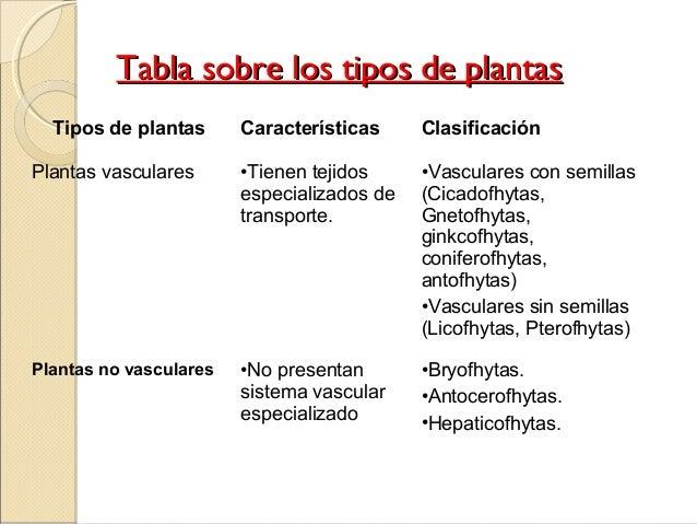 ttiippooss ddee ppllaannttaass tipos de plantas características