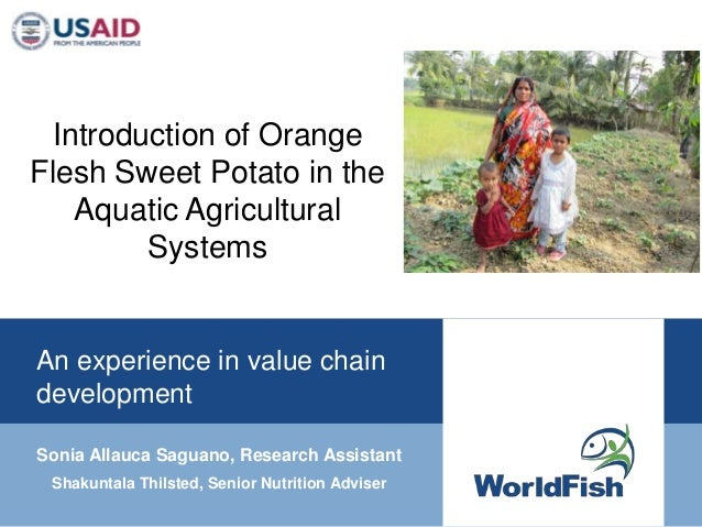 Introduction of OrangeFlesh Sweet Potato in the    Aquatic Agricultural         SystemsAn experience in value chaindevelop...