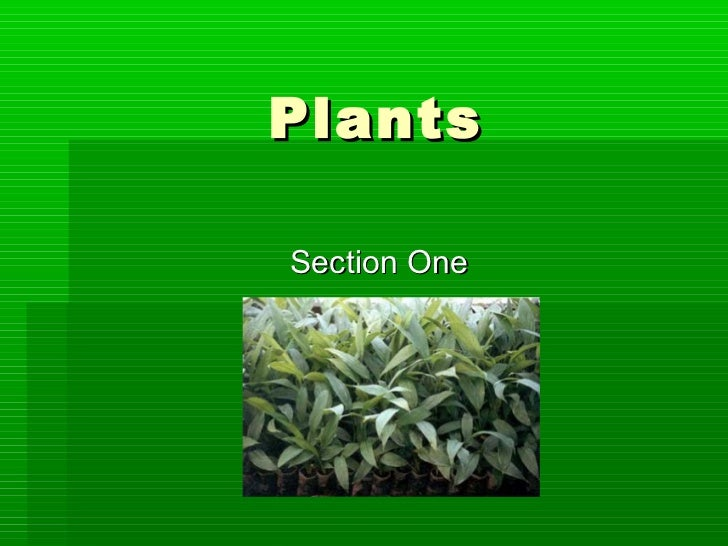 PlantsSection One