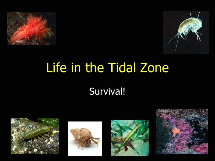 Life in the Tidal Zone Survival!
