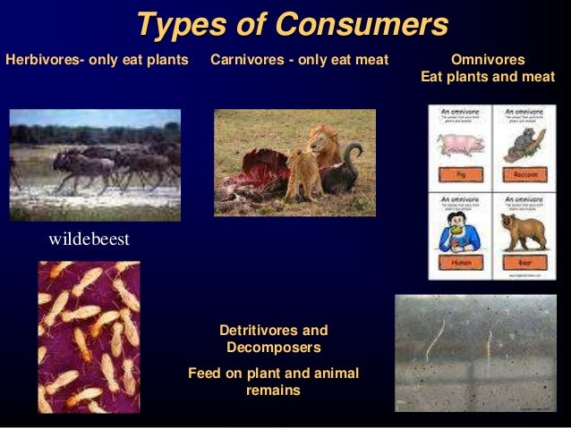 What is Biology?  Biology is the study of life!. - ppt download