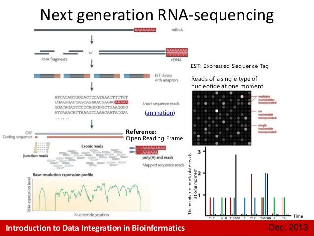 expressed sequence tags est for gene studies Backgroundwe investigate the usefulness of expressed sequence tags, ests, for establishing divergences within the tree of placental mammals this is these results challenge previous studies using est [24], large-scale genomic data [41] –[43], mtgs [9] and the analysis of few housekeeping genes [21.