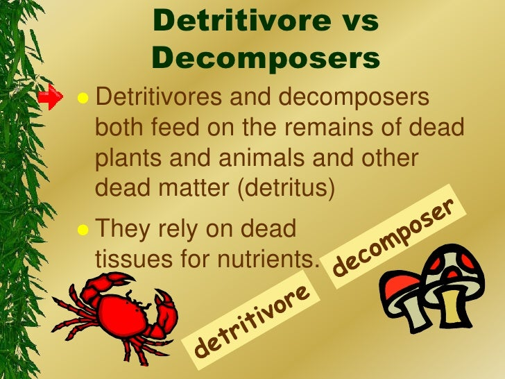 Detritivore vs decomposers detritivores and decomposers both feed on